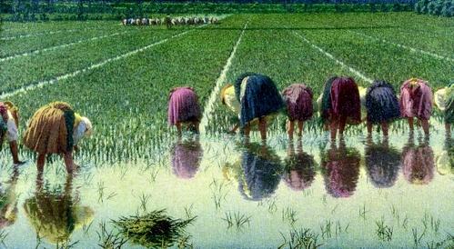 Vita in risaia: lavoro e socialità nella pittura di Angelo Morbelli